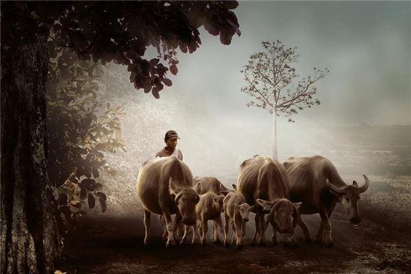 Die Bedeutung und das Symbol des Traums der Kühe auf beiden Seiten der Straße
