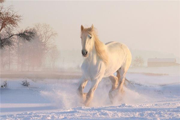 Die Bedeutung und das Symbol der Pferdeverletzung im Traum