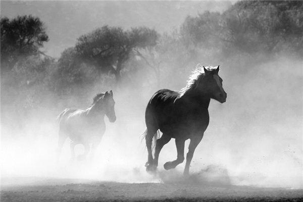Die Bedeutung und das Symbol von Pferden in Träumen
