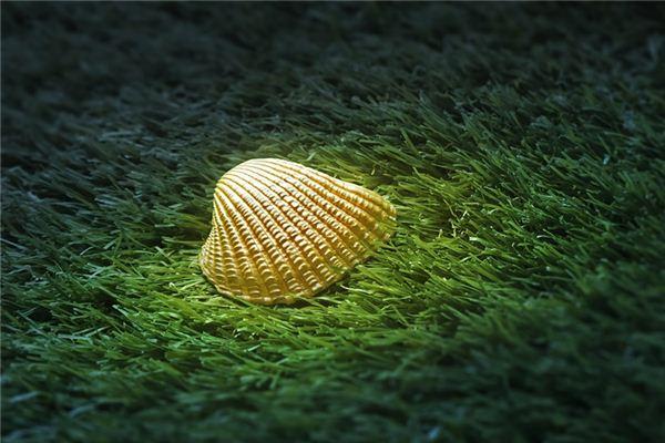 Traumdeutung und Wahrsagerei von Austern