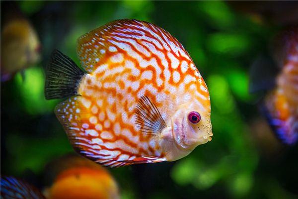 Traumdeutung und Wahrsagerei von einem Fisch gebissen
