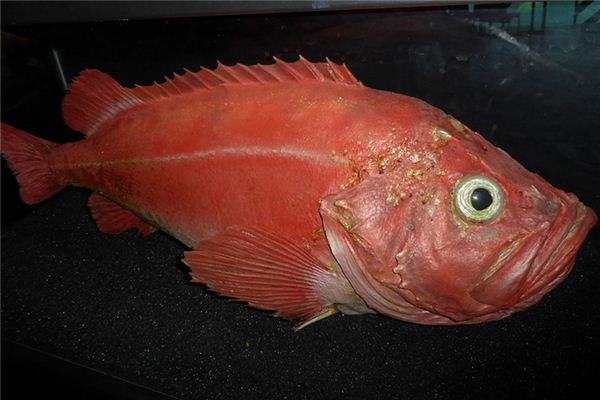Traumdeutung und Wahrsagerei des roten Fisches