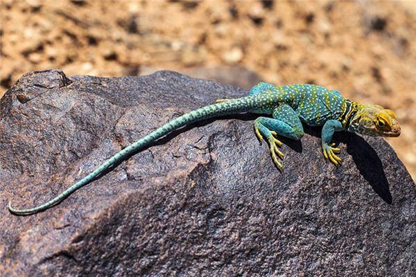 Die Bedeutung und das Symbol von Reptilien in Träumen