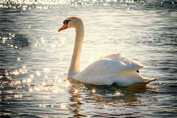 Swans Traumdeutung und Wahrsagerei