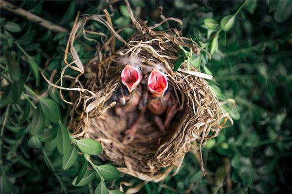 Traumdeutung und Weissagung des Vogelnestes