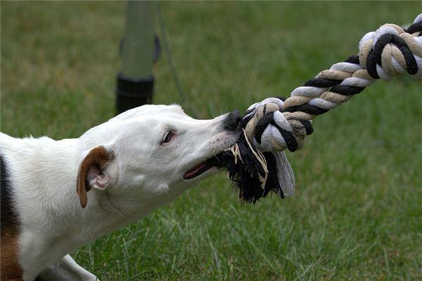 Die Bedeutung und das Symbol des Hundebisses im Traum