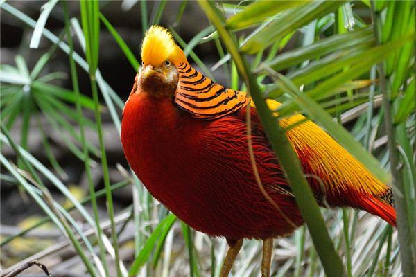 Goldflügelvogel erklärt und symbolisiert in Träumen