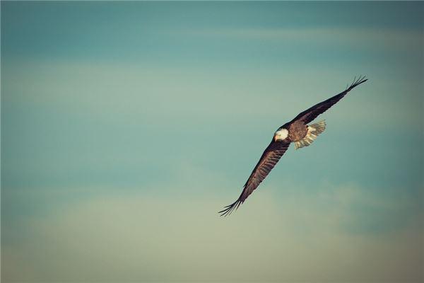 Adlers Traumdeutung und Wahrsagerei