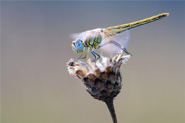 Traumdeutung und Wahrsagerei beim Fangen von Libellen