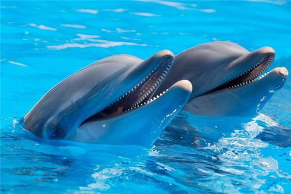Traumdeutung und Wahrsagerei von Dolphins