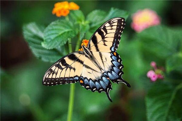 Traumdeutung und Wahrsagerei mit einem Schmetterling auf dem Kopf