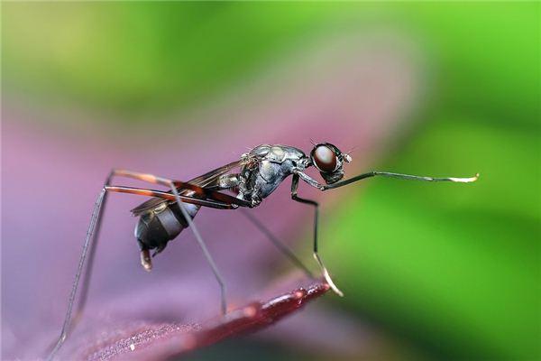 Traumdeutung und Wahrsagerei von Ameisen in der Parade