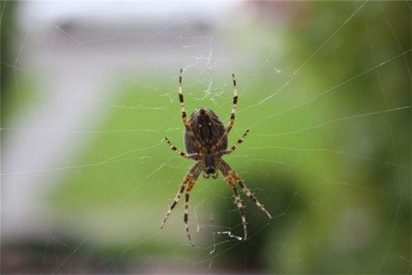 Traumdeutung und Wahrsagerei von Spinnennetzen