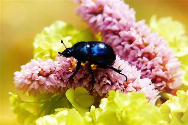 Die Traumdeutung und Wahrsagerei des Käfers