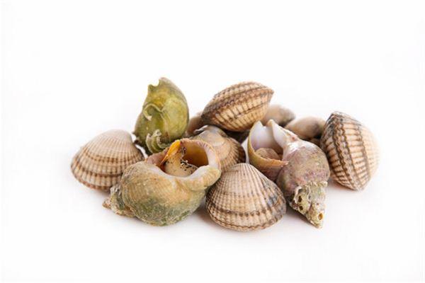 Traumdeutung und Wahrsagerei von Muscheln und anderen Schalentieren