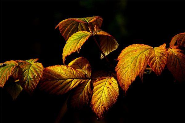 Traumdeutung von goldenen Blättern